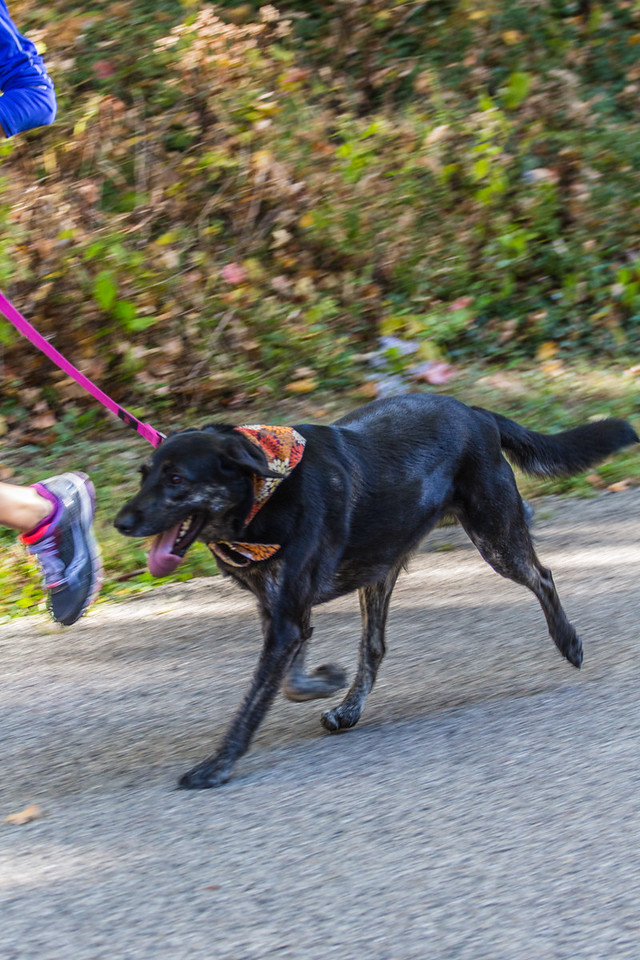 2015Pawjoggers-6731