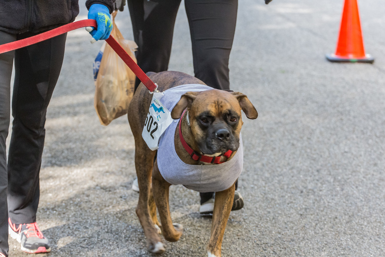 2015Pawjoggers-7639