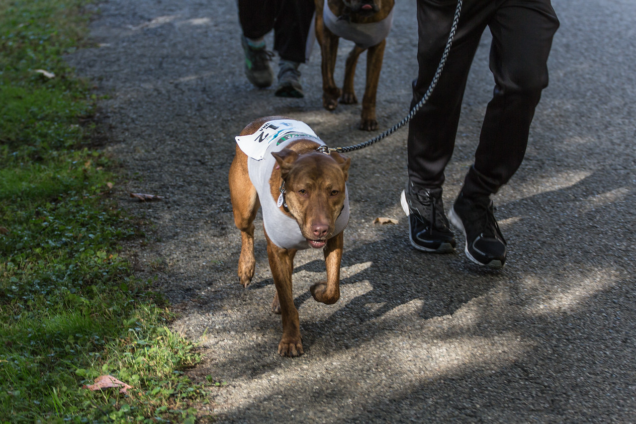 2015Pawjoggers-7057