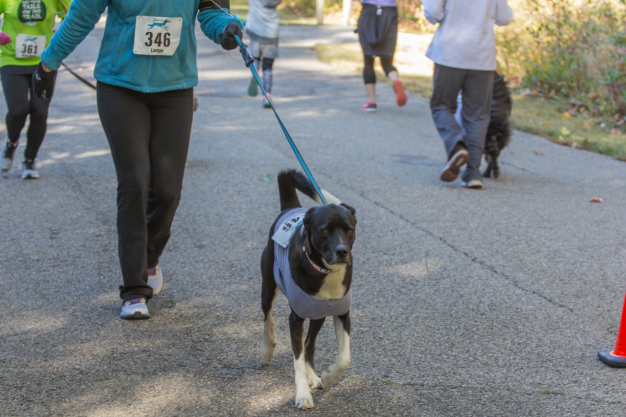 2015Pawjoggers-7006