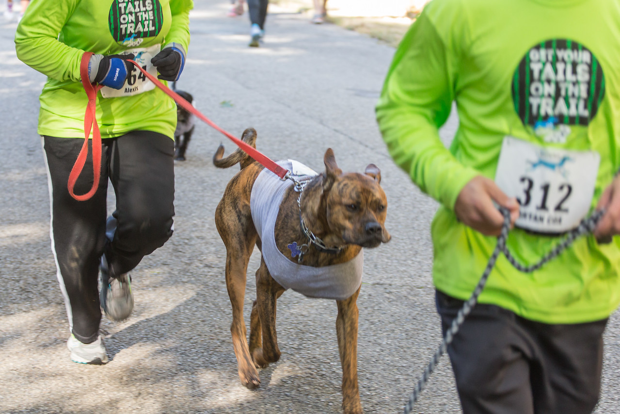 2015Pawjoggers-7059