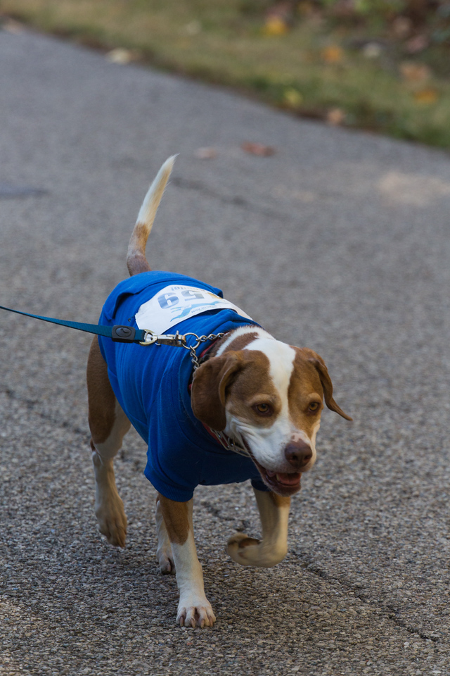 2015Pawjoggers-6842