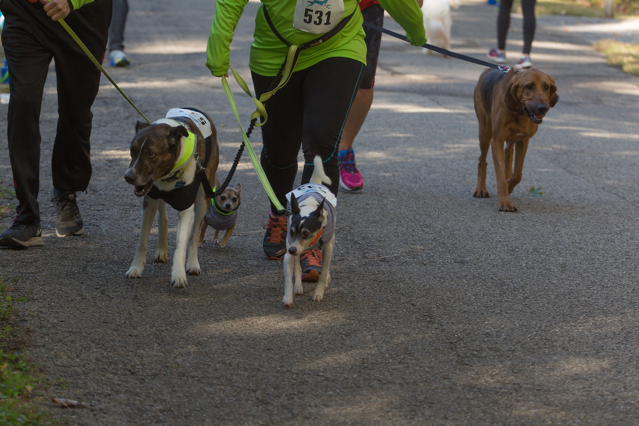 2015Pawjoggers-7217
