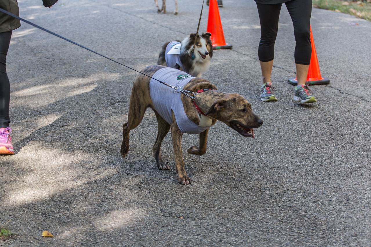2015Pawjoggers-7570