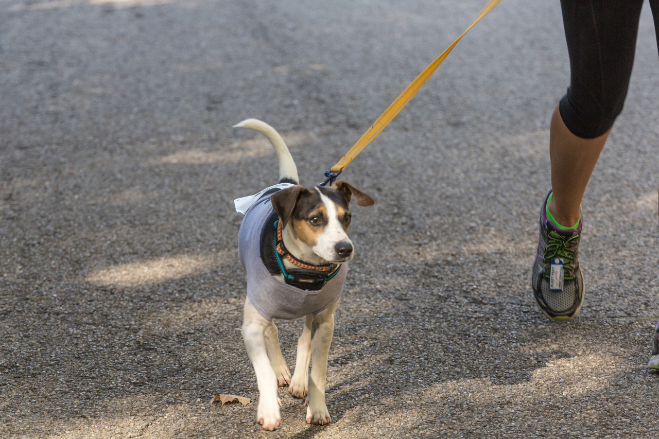 2015Pawjoggers-7108