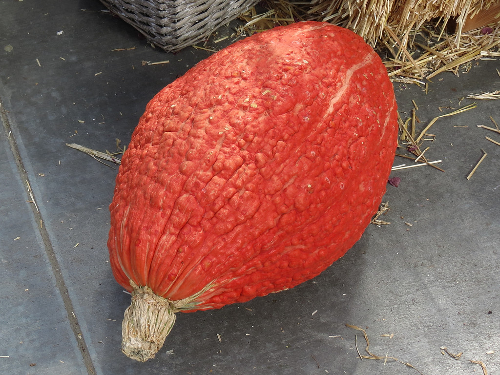 Red-Orange Pumpkin