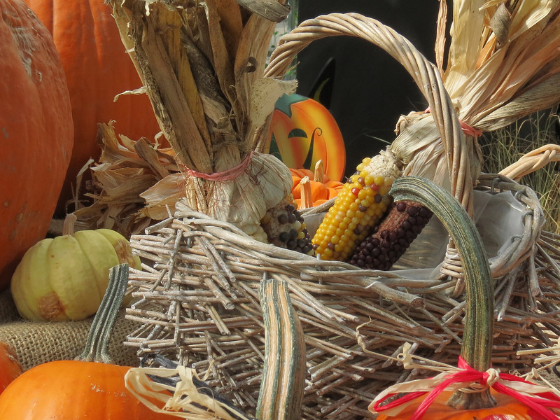 Pumpkins and Ornamental Corn in a basket.