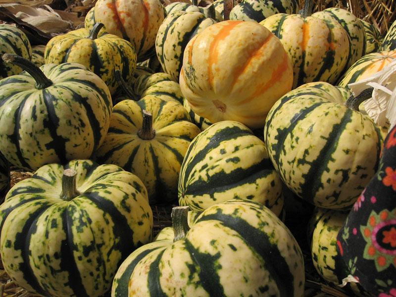 Miniature pumpkins.