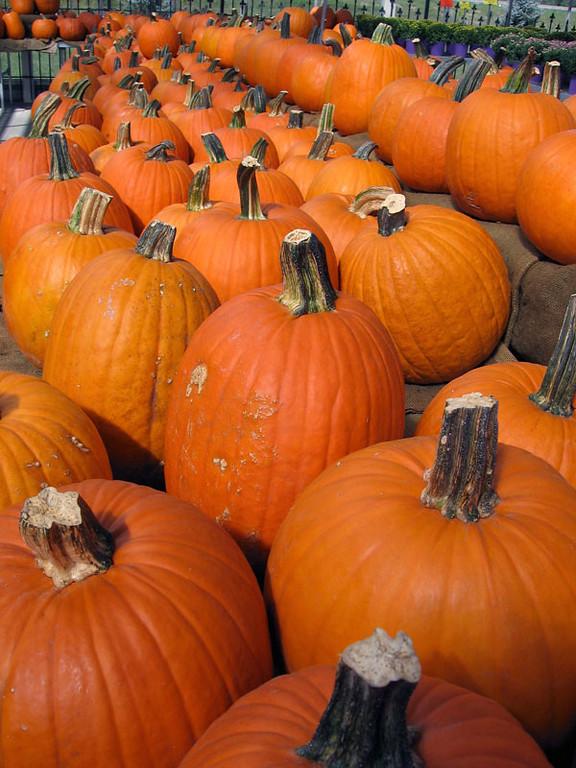 Orange pumpkins awaiting shoppers.