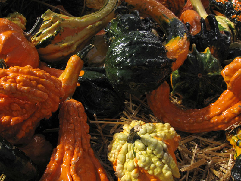 Ornamental gourds.