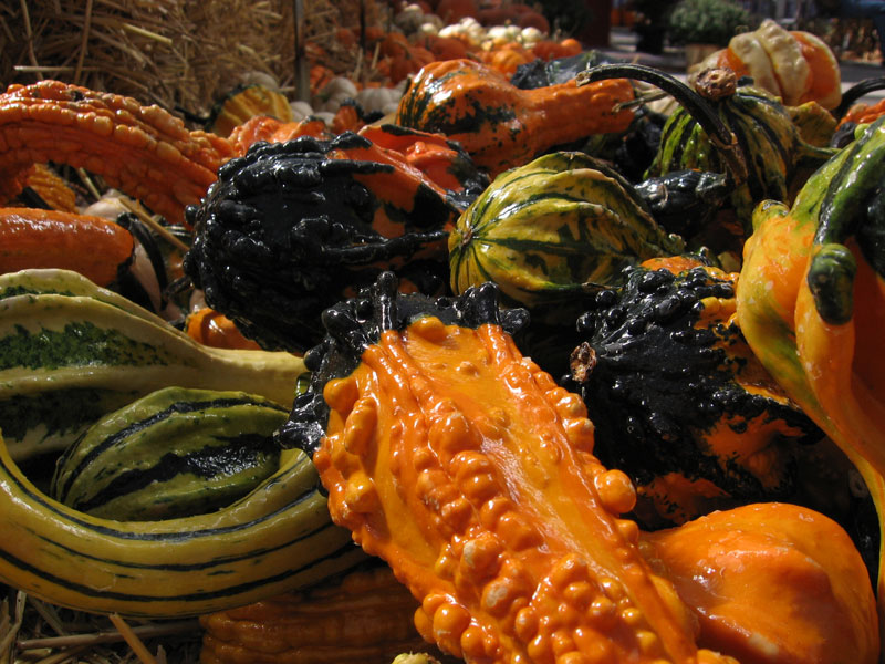 Ornamental gourds.