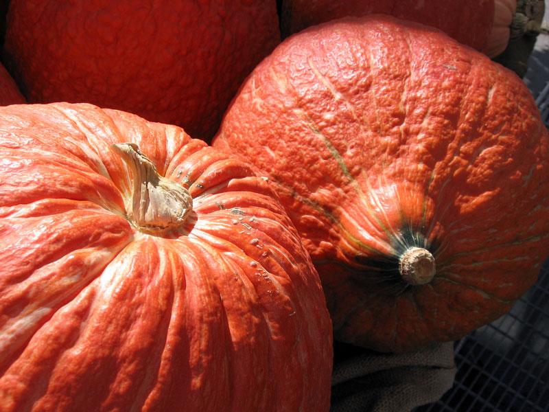 Rough textured pumpkins.