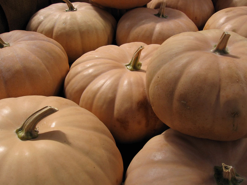 Very pale orange pumpkins.