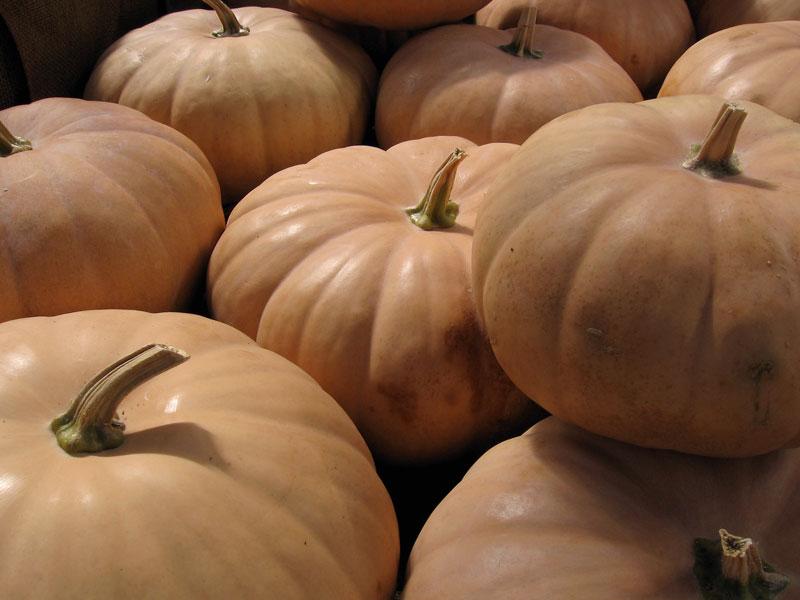 Very pale orange pumpkins.