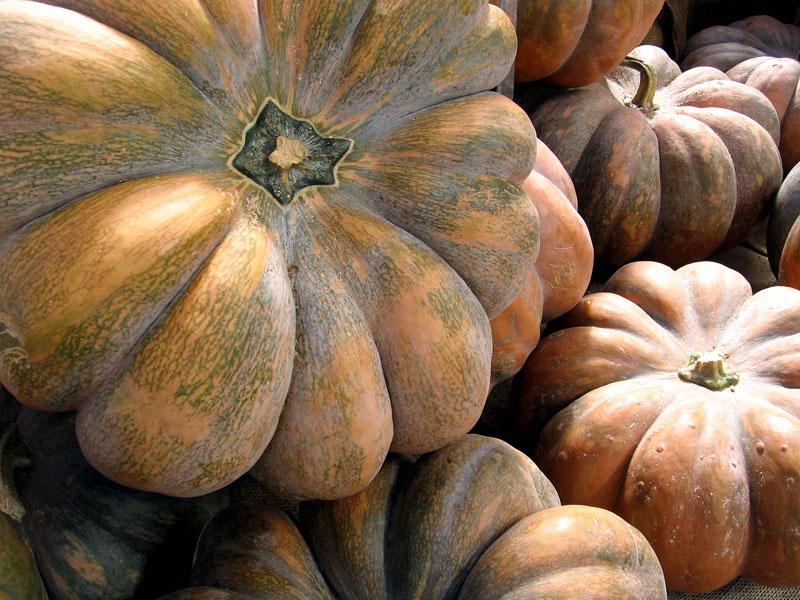 Heavily lobed pumpkins.