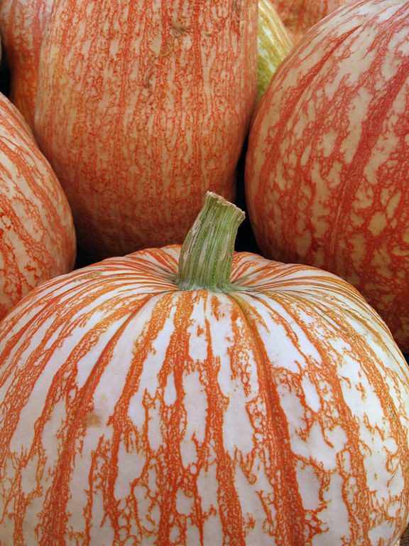 White pumpkins with orange lace markings.