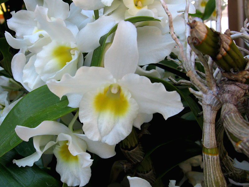 An unruly looking but very attractive display of orchids.