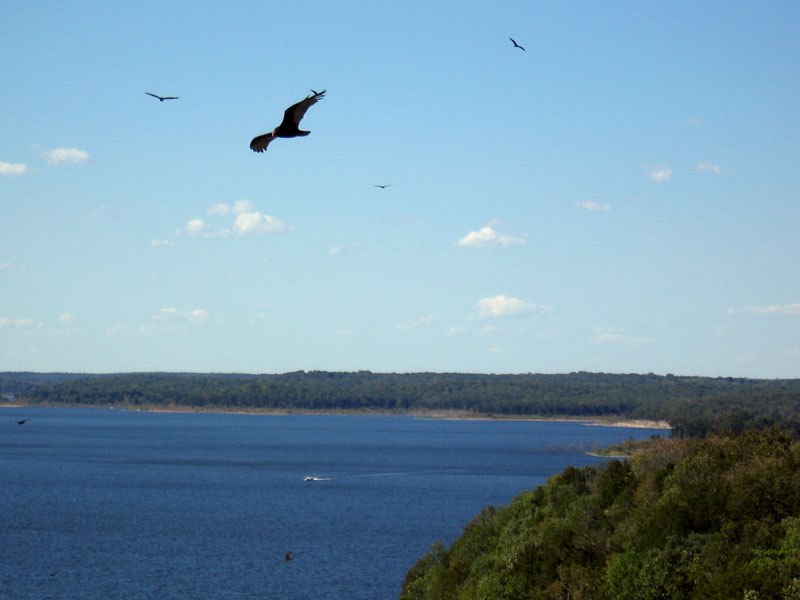 Some of the turkey vultures soaring in the wind next to the bluff the visitor center sits atop.<br /> We also saw a bald eagle but I was unable to get a picture of it.