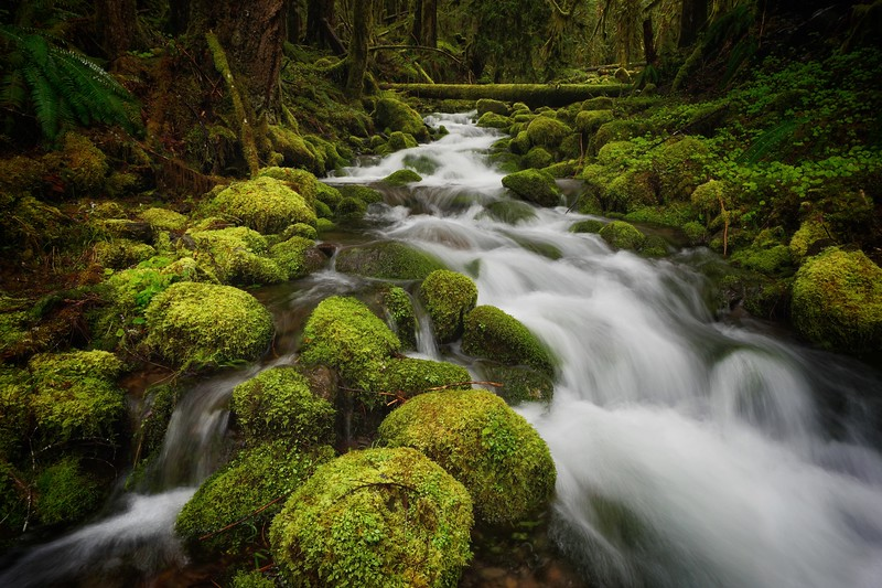 Mossy Creek, Oregon Cascades