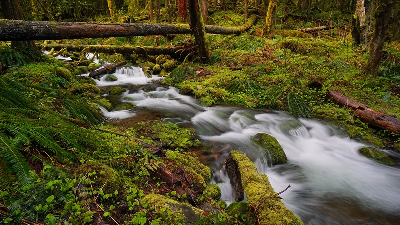 Oregon Cascades Creek