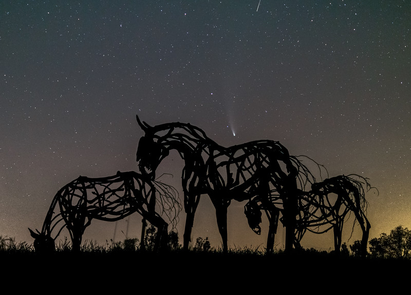 Comet Neowise and Driftwood Horses II