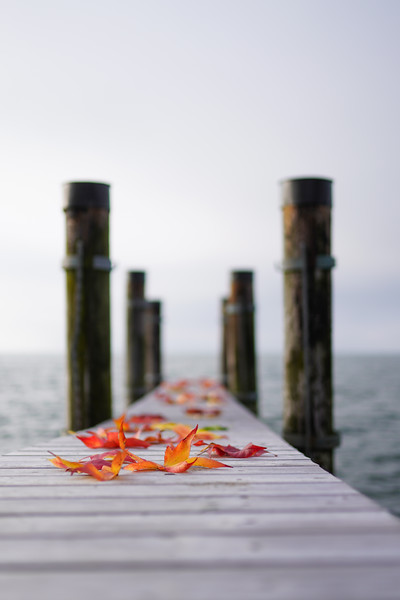 Herbstblätter am Rohrspitz