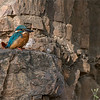 "Always a Favourite Bird<br /> <br /> The common kingfisher is so small, and so difficult to get close to, without a hide and driving around in our Gypsy, we did give some birding a try!<br /> <br /> So small, even difficult to see in the rocks.  A sharp image was indeed quite a challenge! <br /> <br /> Thanks to everyone for viewing my images, best wishes for a good day, and great weekend!<br /> <br /> <br /> Common Kingfisher<br />  <a href=""http://www.raymondbarlow.com"">http://www.raymondbarlow.com</a><br /> RJB India Tours<br /> 1/400s f/5.6 at 400.0mm iso1250"