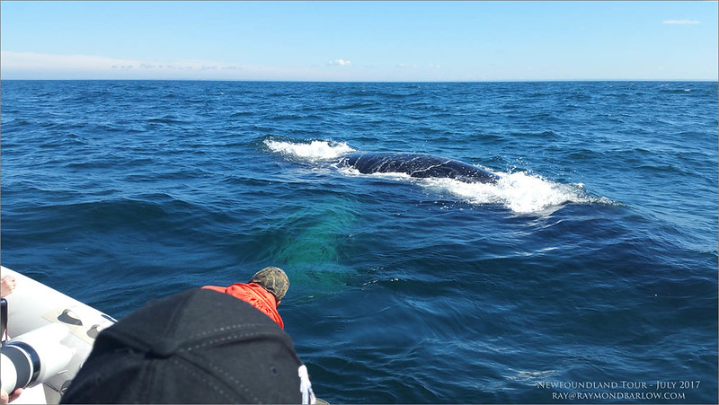 Humpback Whale - Samsung Phone camera