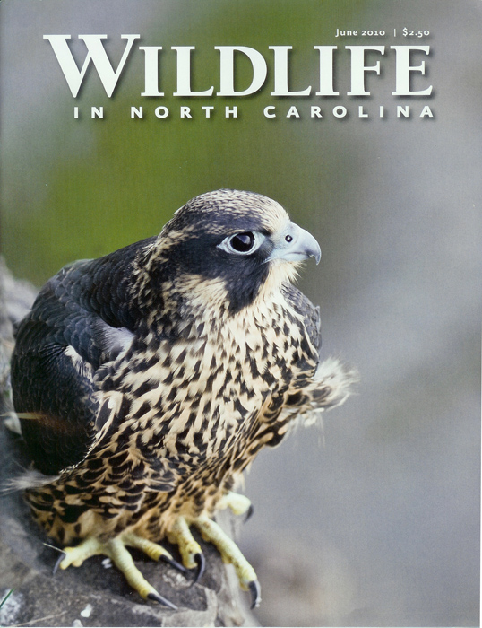 Wildlife in North Carolina (my first cover shot)