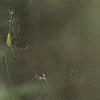 "Giant Wood Spider<br /> RJB India Tours<br /> <br />  <a href=""http://www.raymondbarlow.com"">http://www.raymondbarlow.com</a><br /> 1/80s f/8.0 at 400.0mm iso3200"