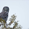 "Great Gray Owl<br /> Raymond's Ontario Nature Tours<br /> <br />  <a href=""http://www.raymondbarlow.com"">http://www.raymondbarlow.com</a><br /> ray@raymondbarlow.com<br /> Nikon D800 ,Nikkor 200-400mm f/4G ED-IF AF-S VR<br /> 1/800s f/4.0 at 400.0mm iso250"