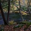Four Trees on the river.<br /> Jobu Algonquin + Jobu Jr. Gimbal