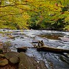 Oxtongue River Scene.  Love the Sony 20mm f1.8!