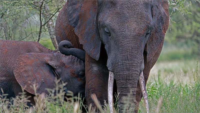 Proud Mother<br /> <br /> Working hard to protect her family, feed the young ones, and keep everyone safe.<br /> <br /> An ongoing challenge for all of us!<br /> <br /> Love true nature.