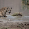 Spotted Hyena<br /> RJB Tanzania, Africa Tours<br /> <br /> ray@raymondbarlow.com<br /> 1/2500s f/4.0 at 400.0mm iso200