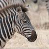 Zebra<br /> RJB Tanzania, Africa Tours<br /> <br /> ray@raymondbarlow.com<br /> 1/400s f/10.0 at 400.0mm iso400