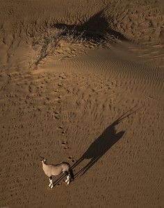 Oryx Shadow