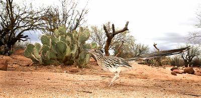Arizona March 2018