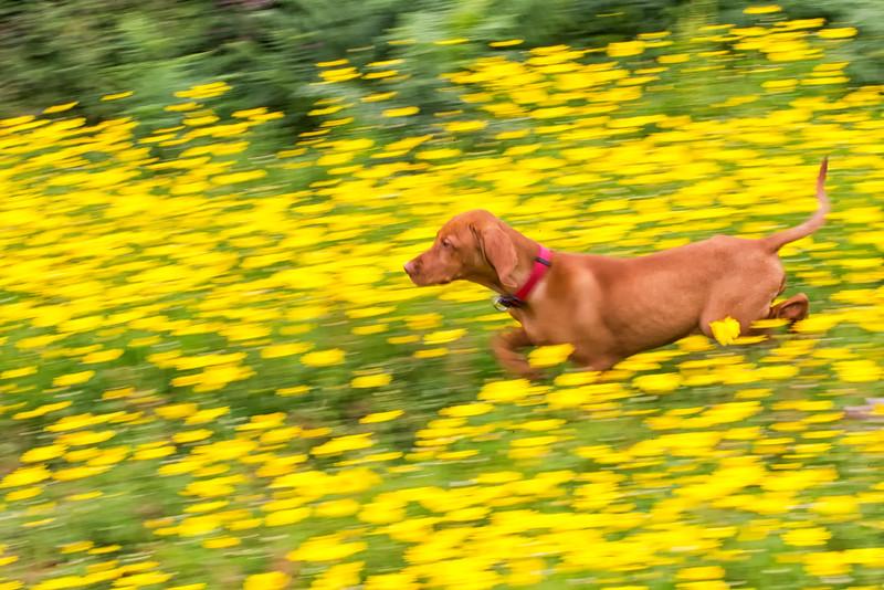 Bosca Puppy in Cornish Flowers