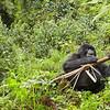Rwanda Hirwa Group