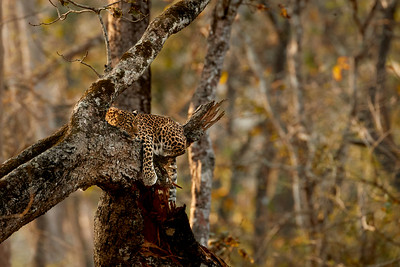 Kabini Forest