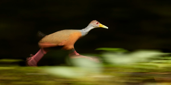Wood rail on the Run