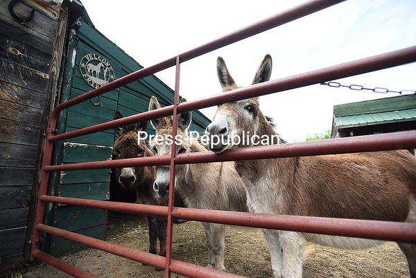 KAYLA BREEN/ STAFF PHOTOS<br /> Peaceful Valley Donkey Rescue saves donkeys from abuse and finds them new homes around the country. The public is invited to meet the newcomers to Kickin' Up Dust at an adoption event set for 11 a.m. to 3 p.m. Saturday, June 3.