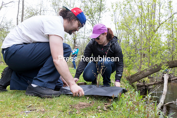 GABE DICKENS/ P-R PHOTO<br /> Beekmantown residents Tim Palmer and Ashley Follan install a weed mat around a newly planted redstem dogwood along Rae Brook and the Heritage Trail in Beekmantown. The Clinton County Soil and Water Conservation District teamed up with the New York State Department of Environmental Conservation through their Trees for Tributaries program to plant 75 shrubs and 75 trees, including sandbar willow, speckled alder, silver maple, white spruce and gray birch, in riparian areas to prevent soil erosion, improve water quality and restore habitat for wildlife and fish. The state conservation program, which provides plants for a small fee or free of charge, is also available to landowners within the Champlain Watershed, which includes most of Clinton County and parts of Essex and Franklin counties, who have streams or rivers running through their property.