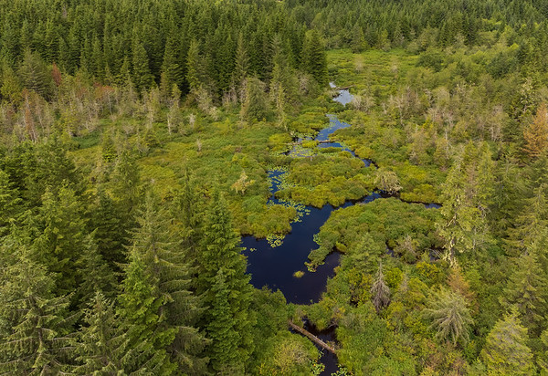Creek and bog/marsh.