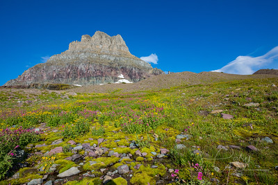 Logan Pass - Clements Mountain- Glacier National Park covered in Wildflowers - September 2018