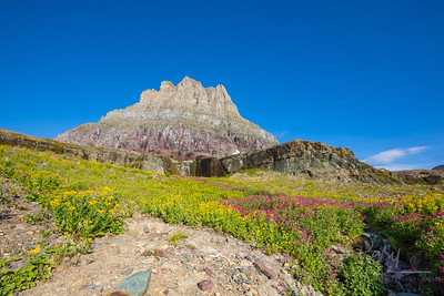 Logan Pass Wildflowers in September 2018