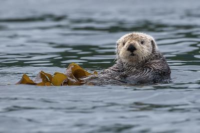 Wrapped in kelp.