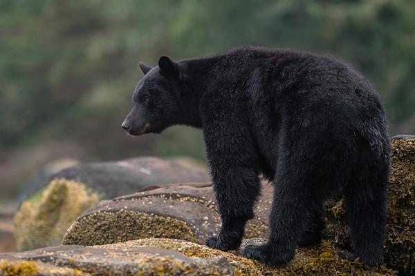 A Portrait of Grumpy Bear