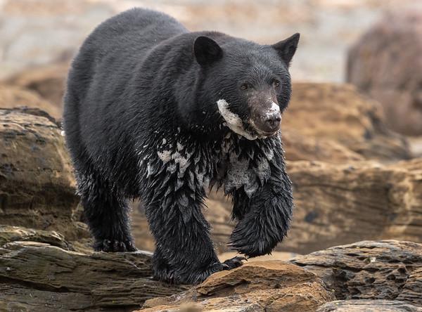 Bubble Bath Bear